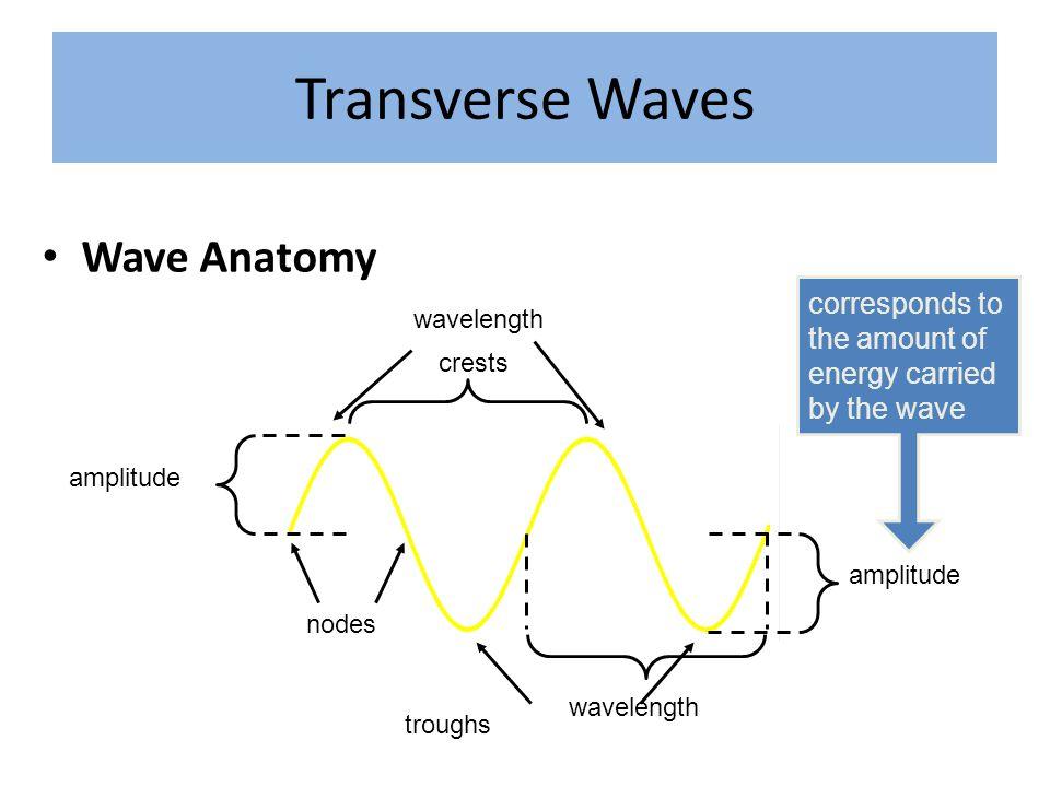 Transverse Waves Wave Anatomy