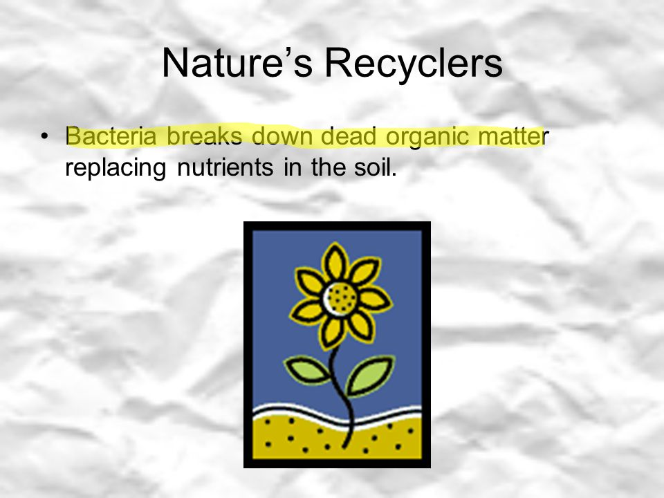 Nature's Recyclers Bacteria breaks down dead organic matter replacing nutrients in the soil.