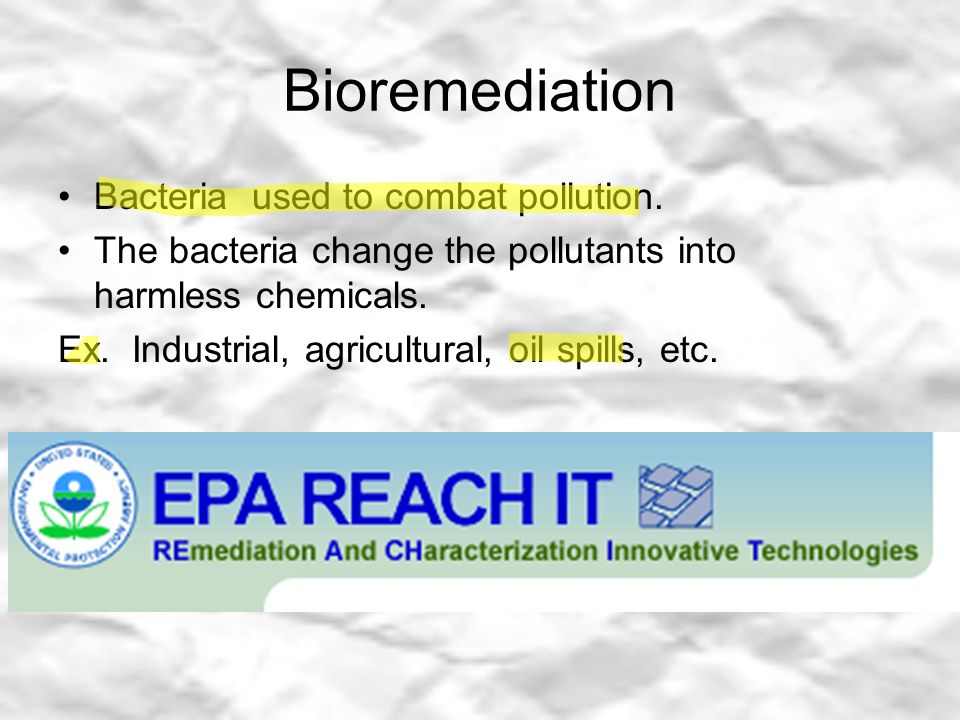 Bioremediation Bacteria used to combat pollution.