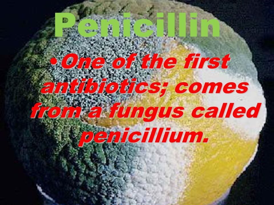 One of the first antibiotics; comes from a fungus called penicillium.