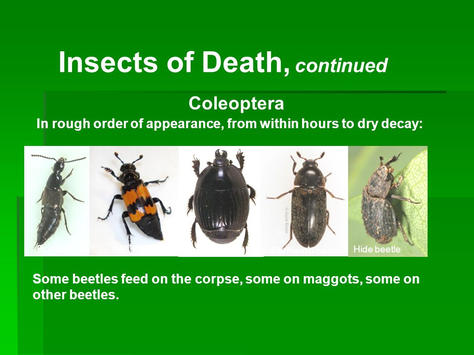 Insects of Death, continued