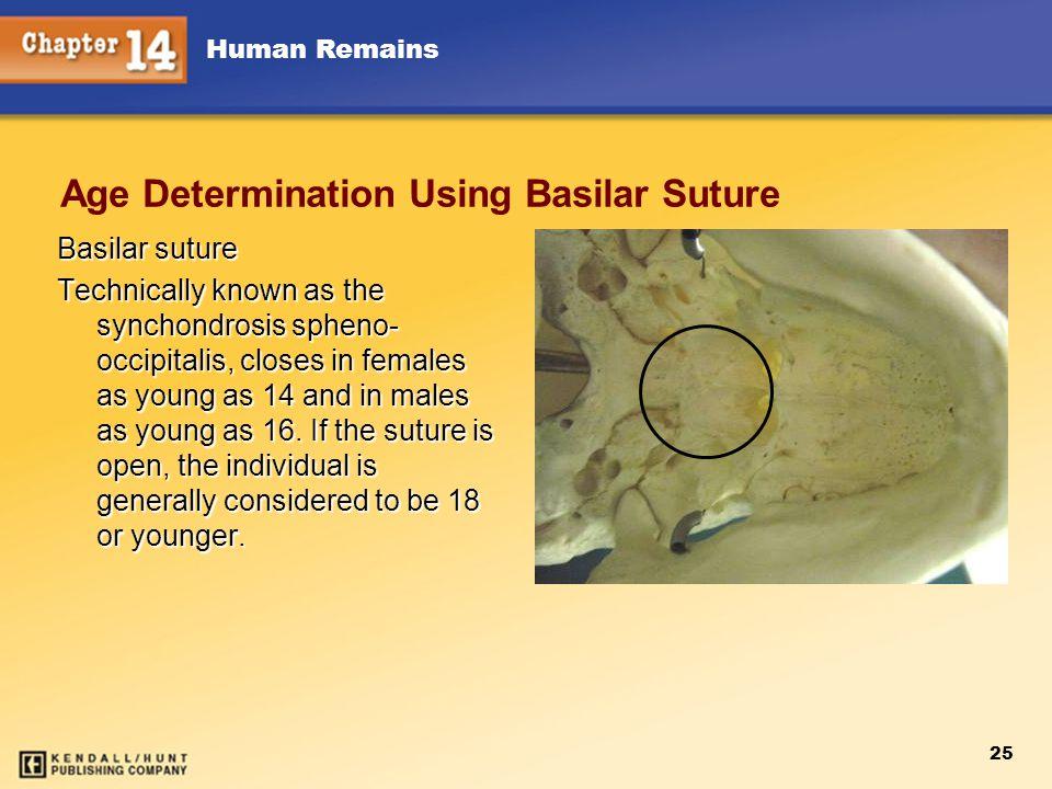 Age Determination Using Basilar Suture