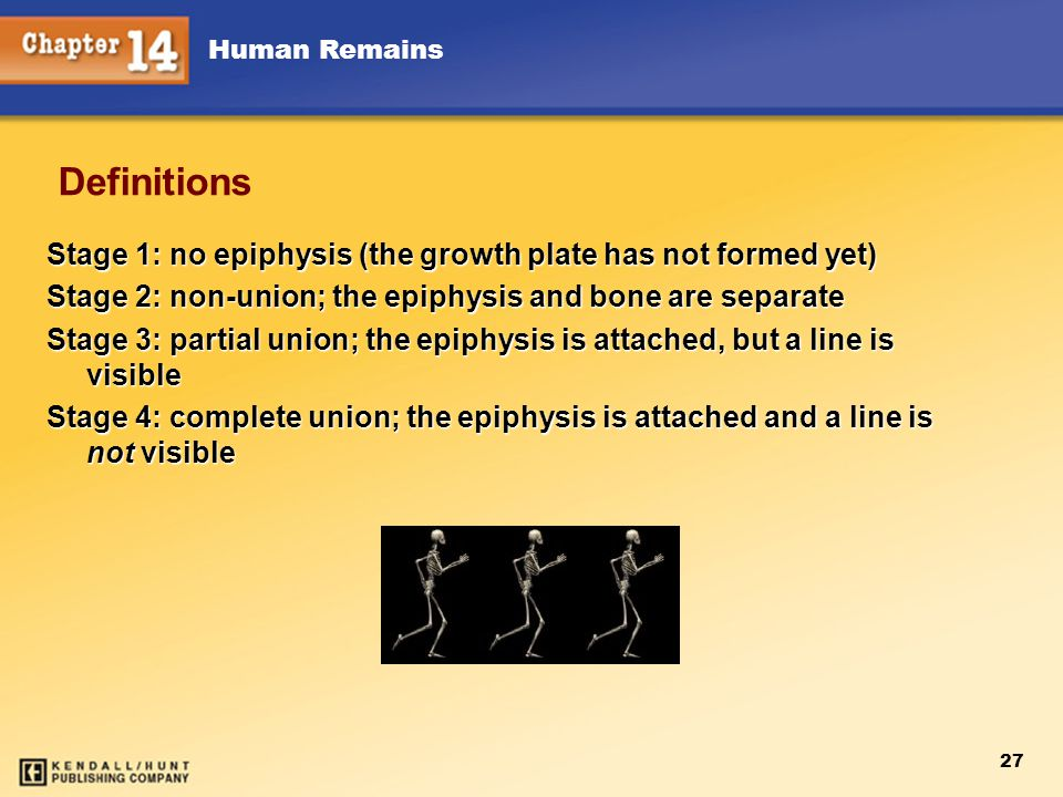 Chapter 12 Chapter 12. Definitions. Stage 1: no epiphysis (the growth plate has not formed yet)