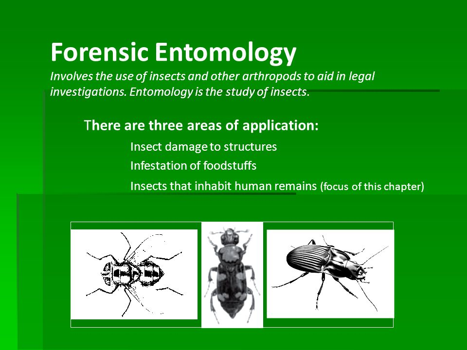 Forensic Entomology There are three areas of application: