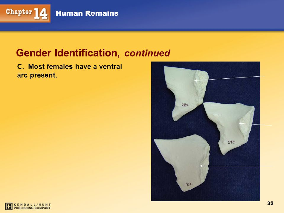 Gender Identification, continued