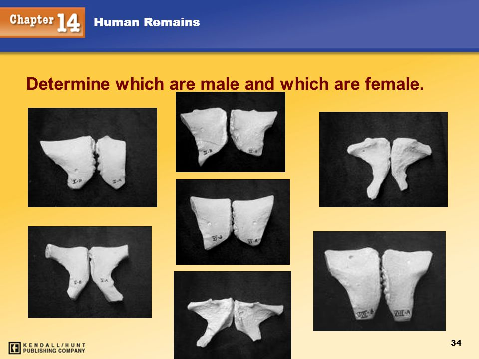 Determine which are male and which are female.
