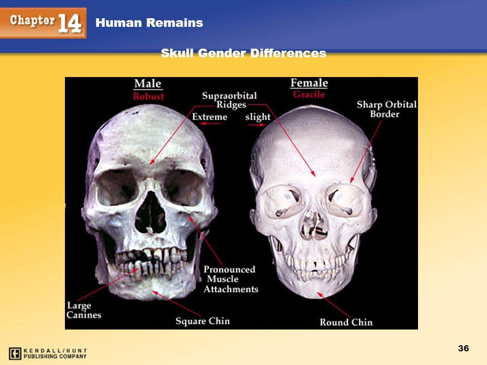 Skull Gender Differences