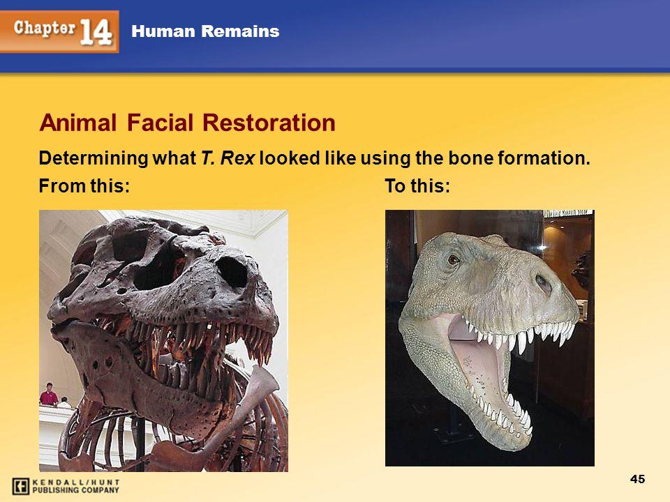 Animal Facial Restoration
