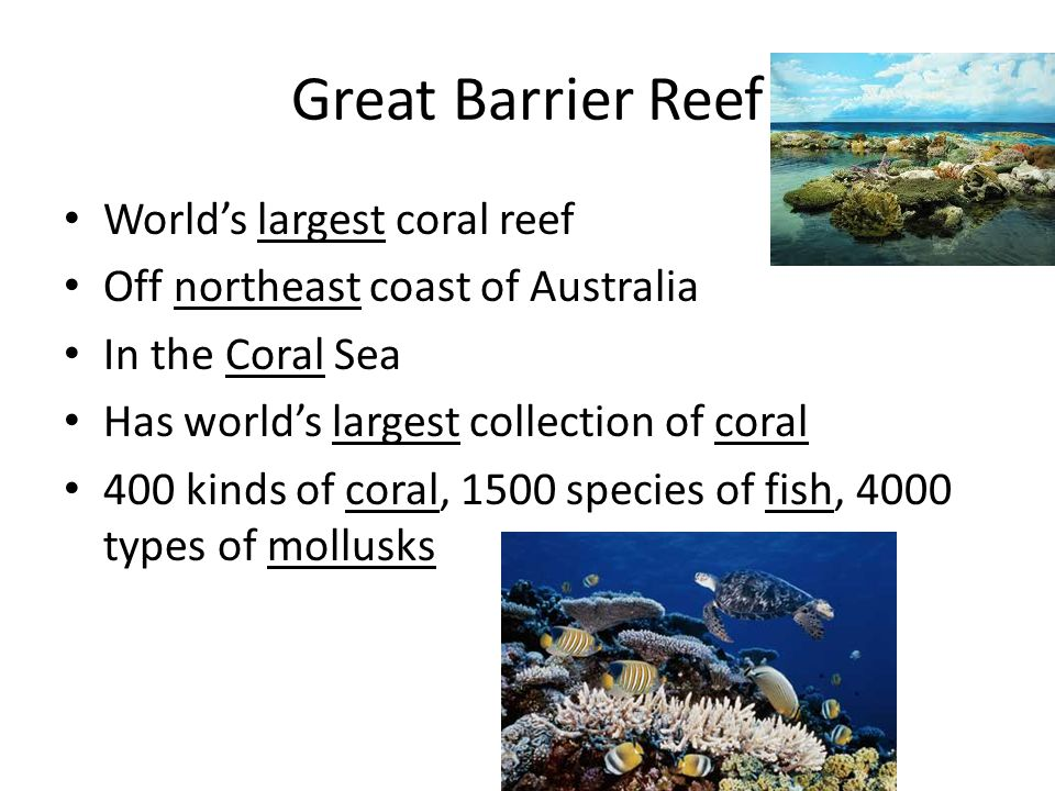 Great Barrier Reef World's largest coral reef