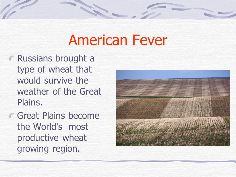 American Fever Russians brought a type of wheat that would survive the weather of the Great Plains.