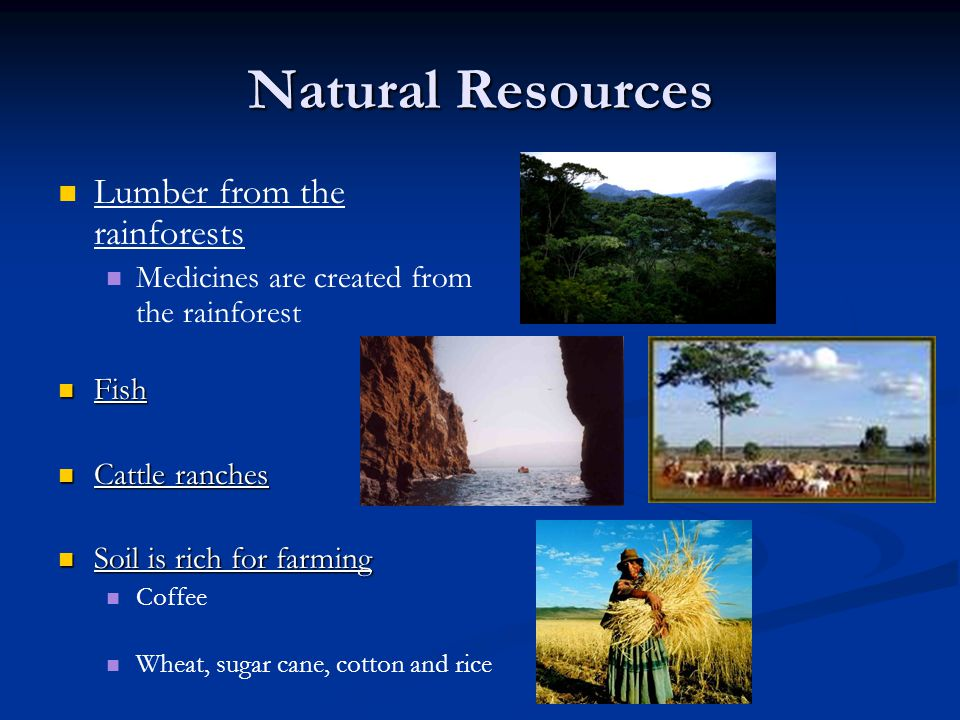 Natural Resources Lumber from the rainforests