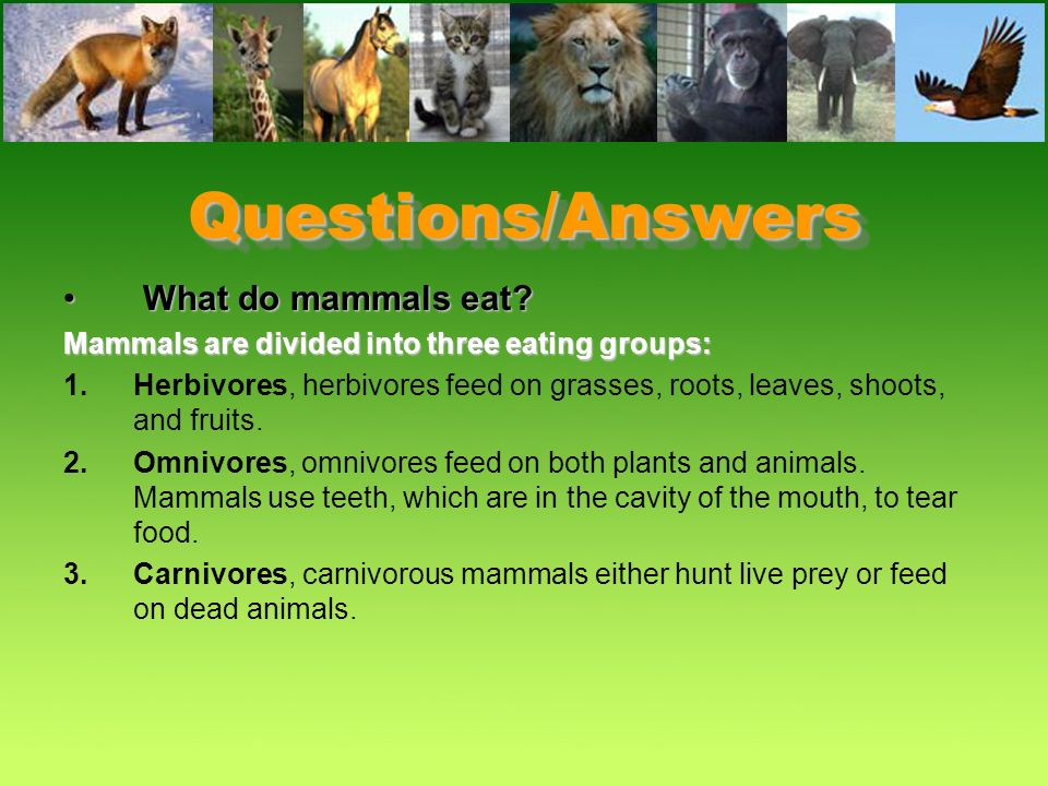Questions/Answers What do mammals eat