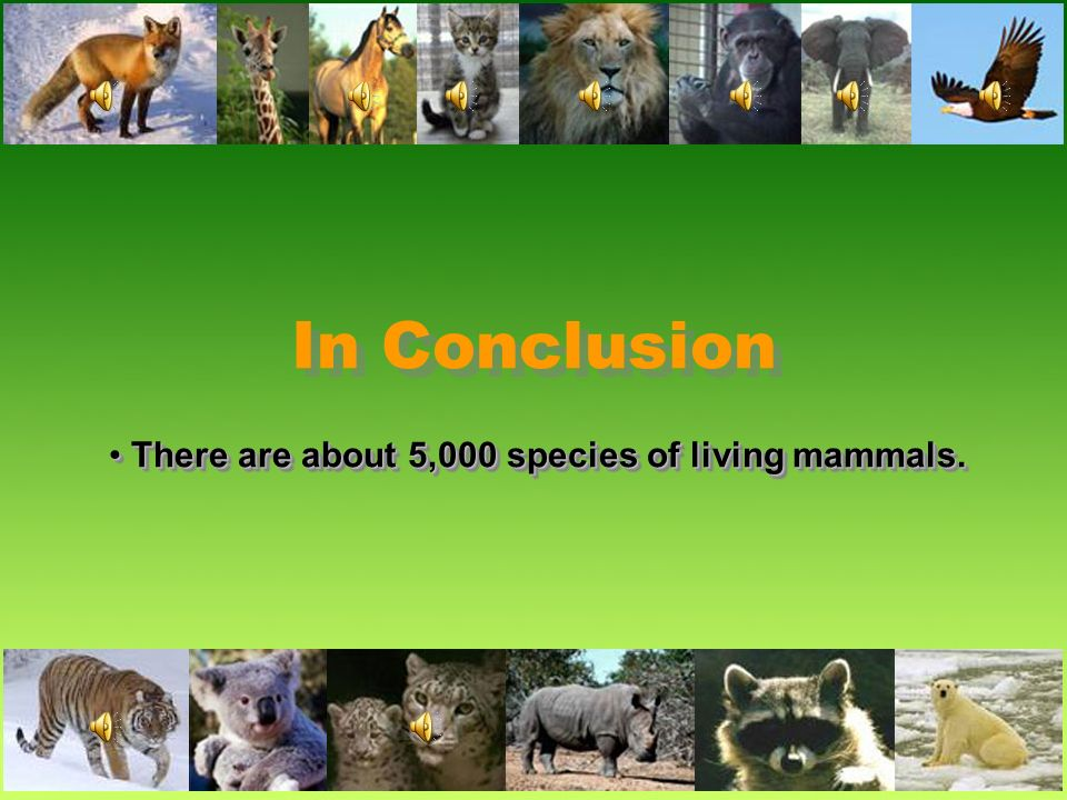 There are about 5,000 species of living mammals.