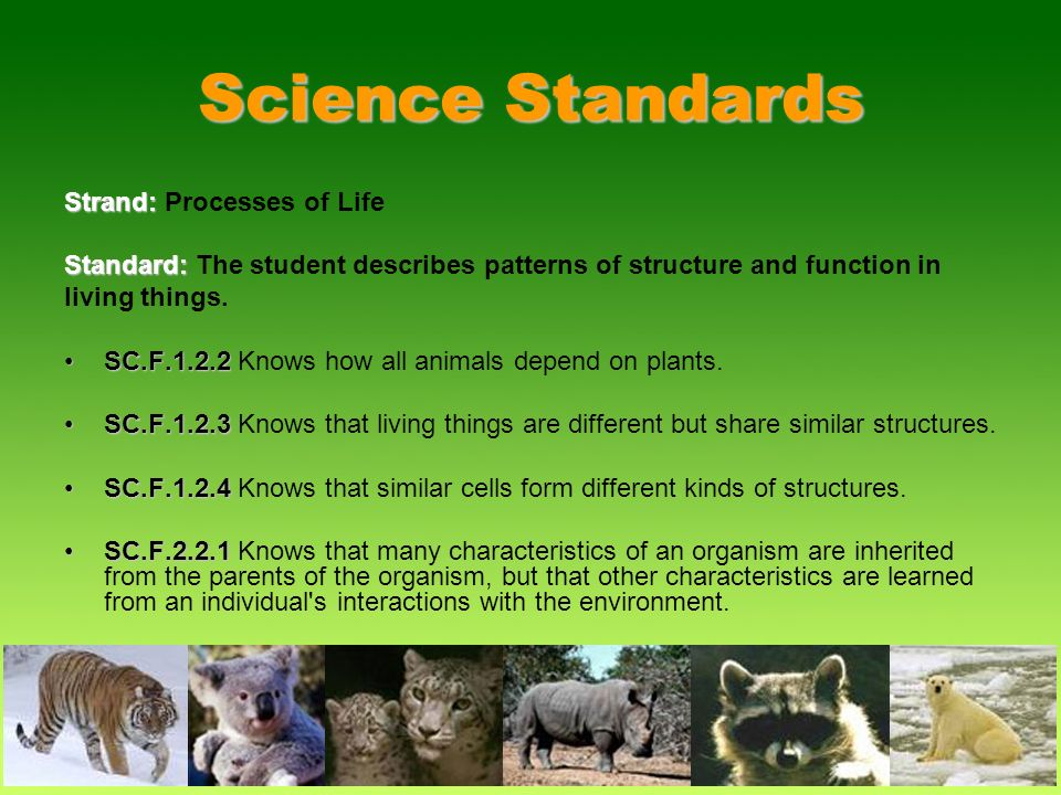 Science Standards Strand: Processes of Life