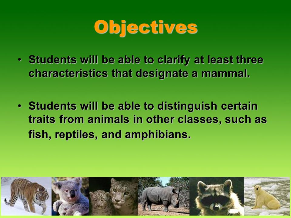 Objectives Students will be able to clarify at least three characteristics that designate a mammal.