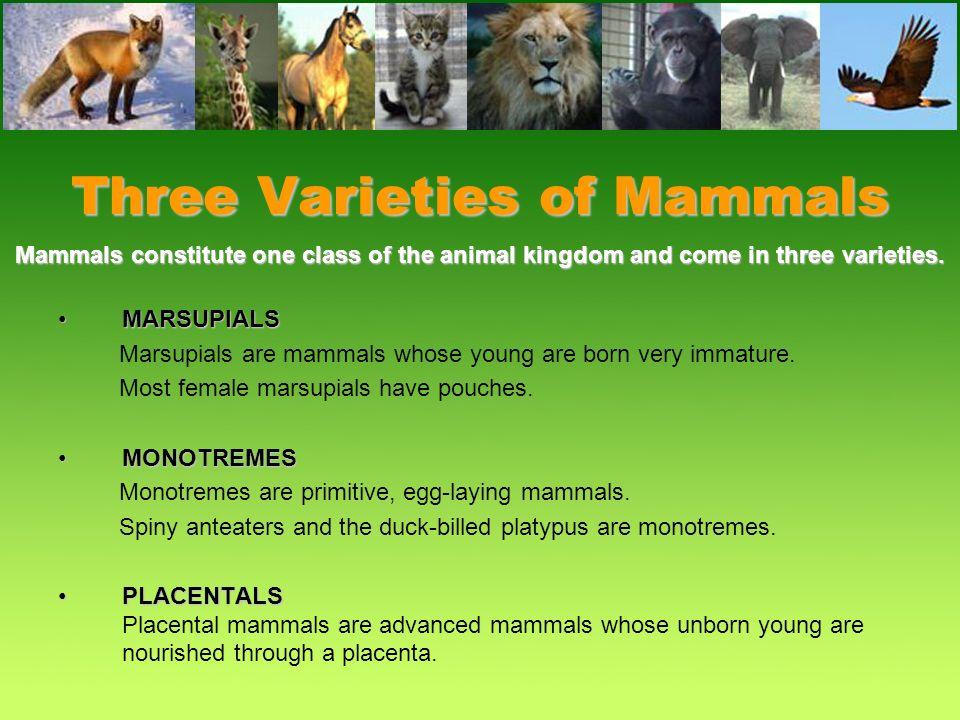 Three Varieties of Mammals