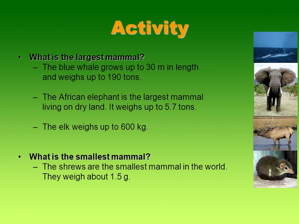 Activity What is the largest mammal