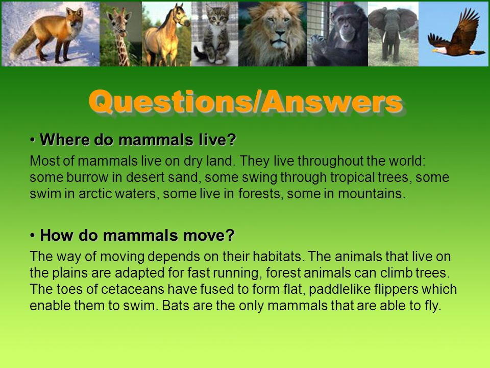 Questions/Answers Where do mammals live How do mammals move
