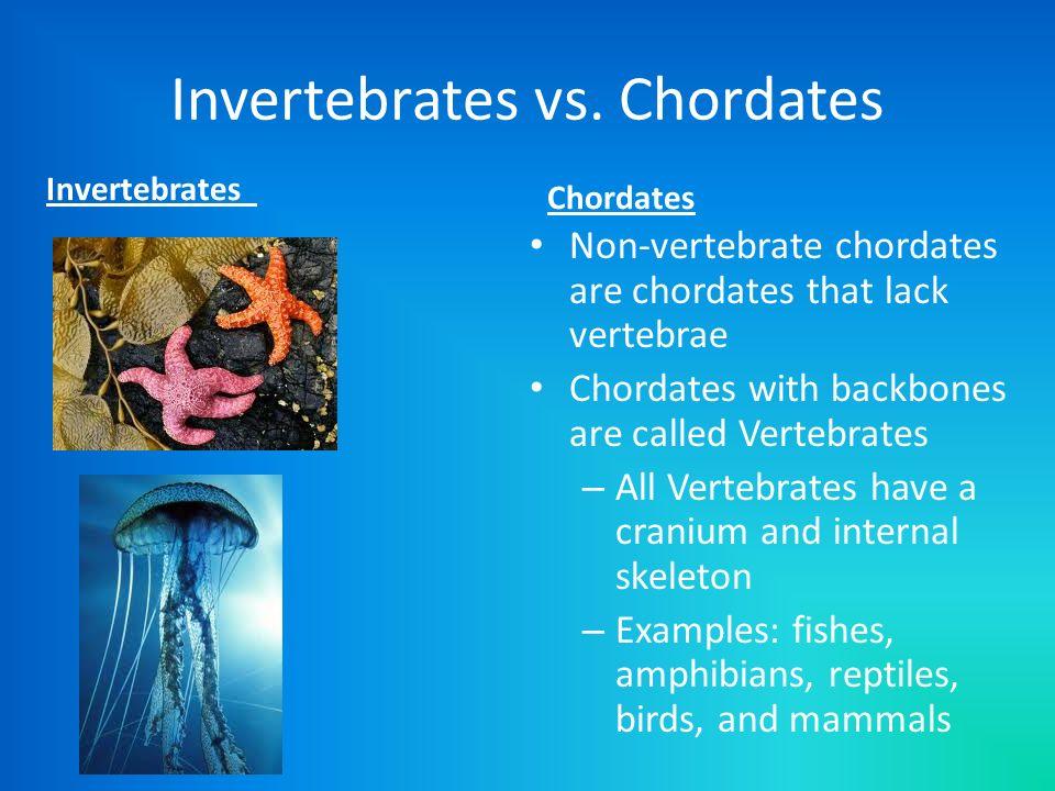 Invertebrates vs. Chordates