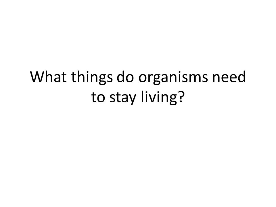 What things do organisms need to stay living