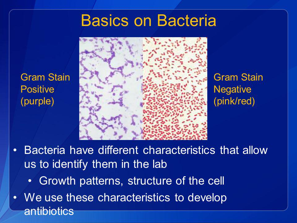 Basics on Bacteria Gram Stain. Positive. (purple) Gram Stain. Negative. (pink/red)