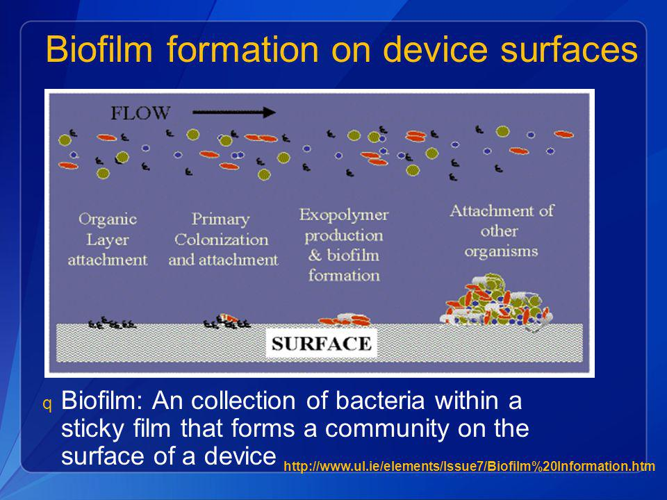 Biofilm formation on device surfaces
