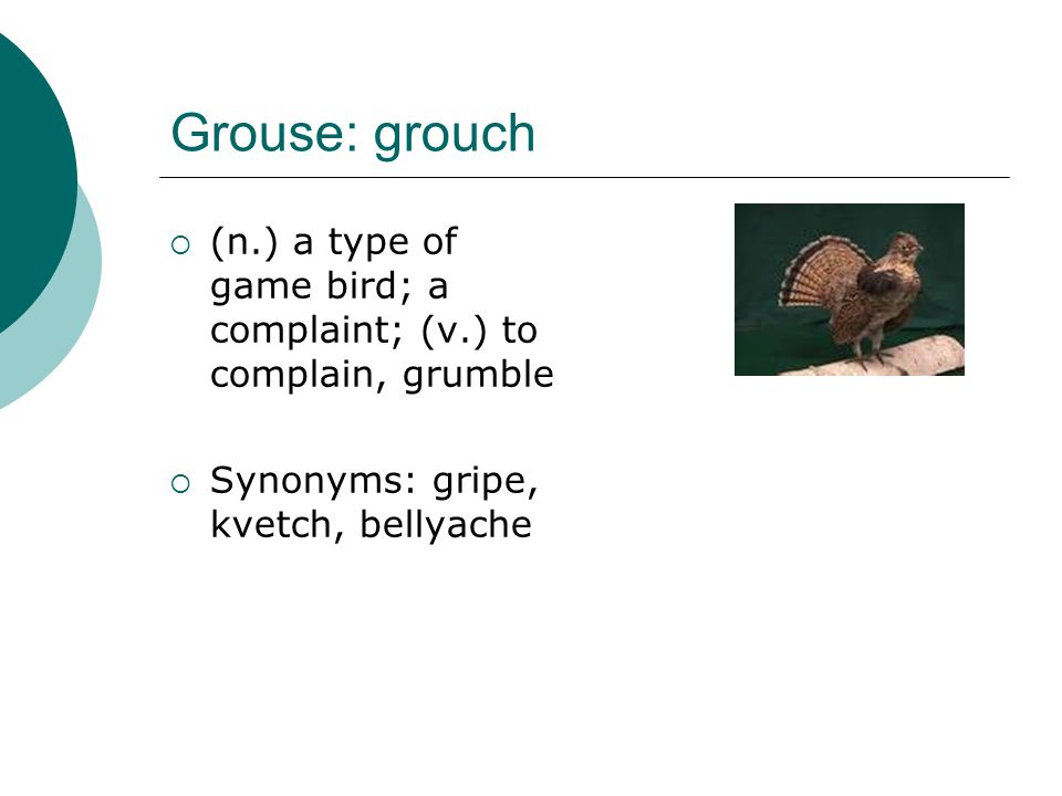 Grouse: grouch (n.) a type of game bird; a complaint; (v.) to complain, grumble.