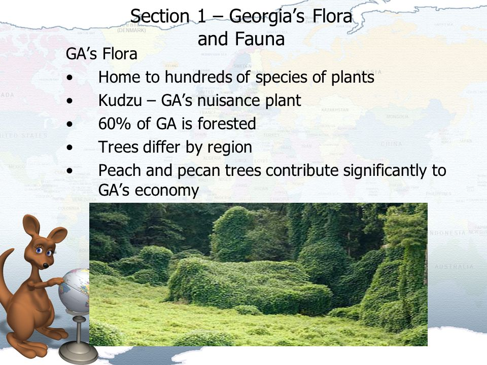 Section 1 – Georgia's Flora and Fauna