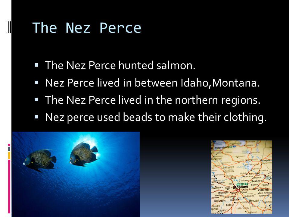 The Nez Perce The Nez Perce hunted salmon.