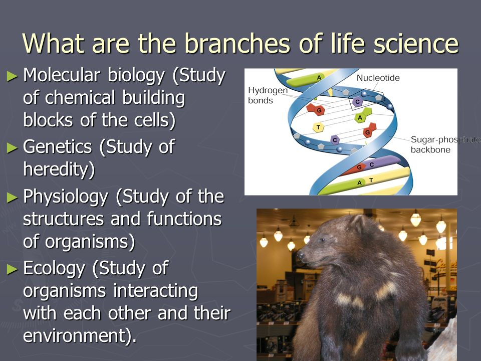 What are the branches of life science