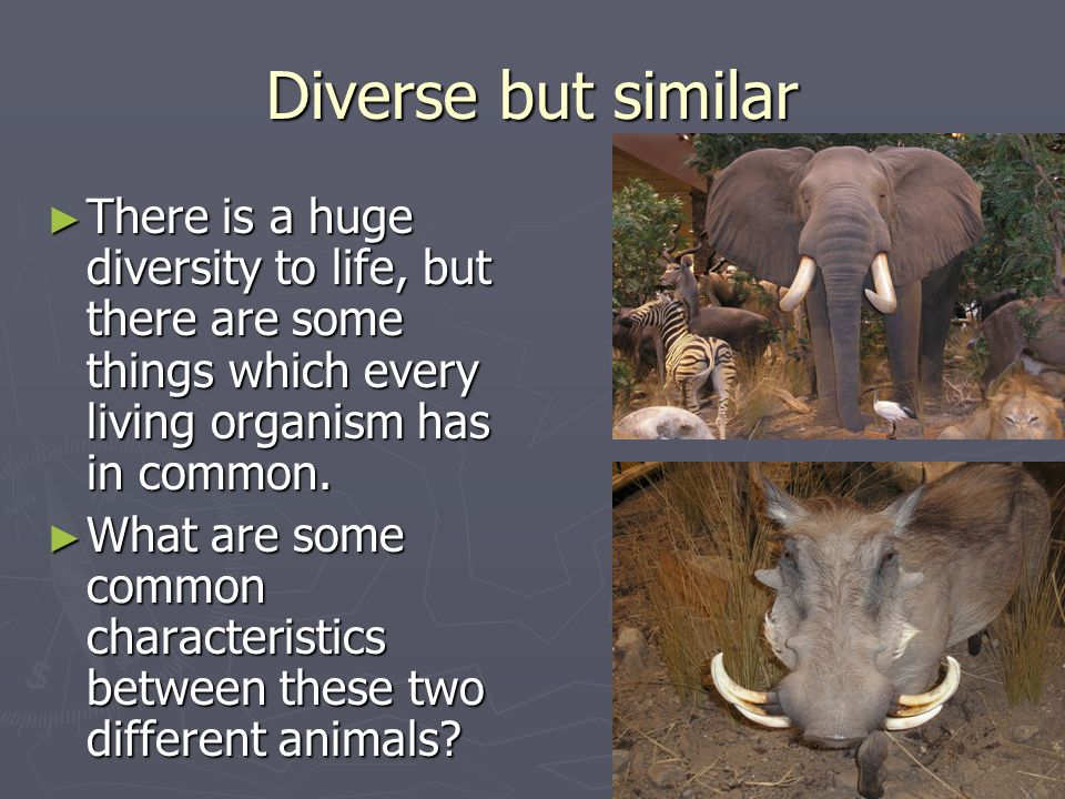 Diverse but similar There is a huge diversity to life, but there are some things which every living organism has in common.