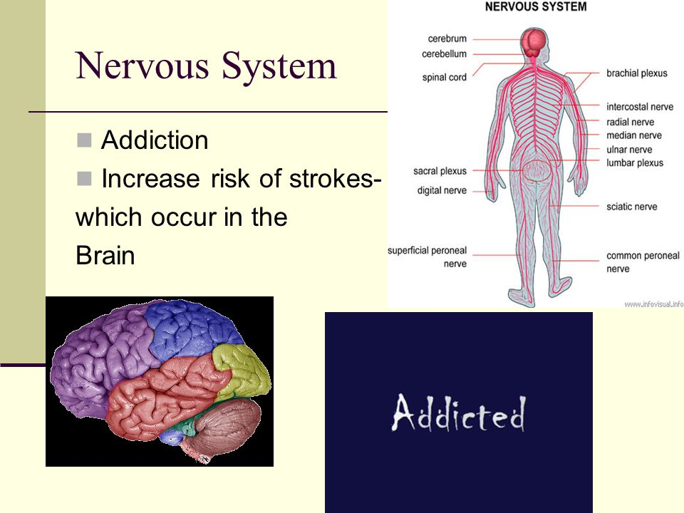 Nervous System Addiction Increase risk of strokes- which occur in the