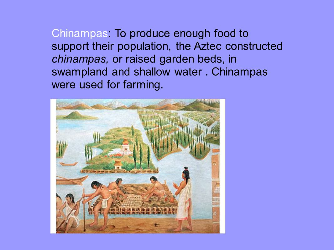 Chinampas: To produce enough food to support their population, the Aztec constructed chinampas, or raised garden beds, in swampland and shallow water .