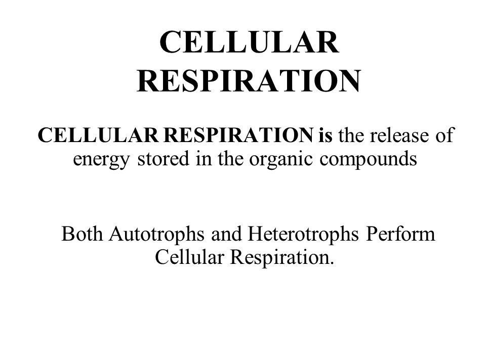 Both Autotrophs and Heterotrophs Perform Cellular Respiration.