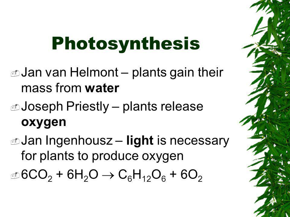 Photosynthesis Jan van Helmont – plants gain their mass from water