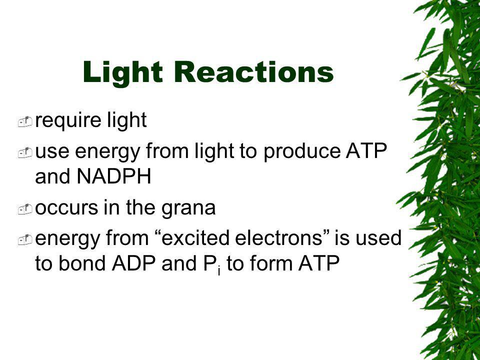 Light Reactions require light