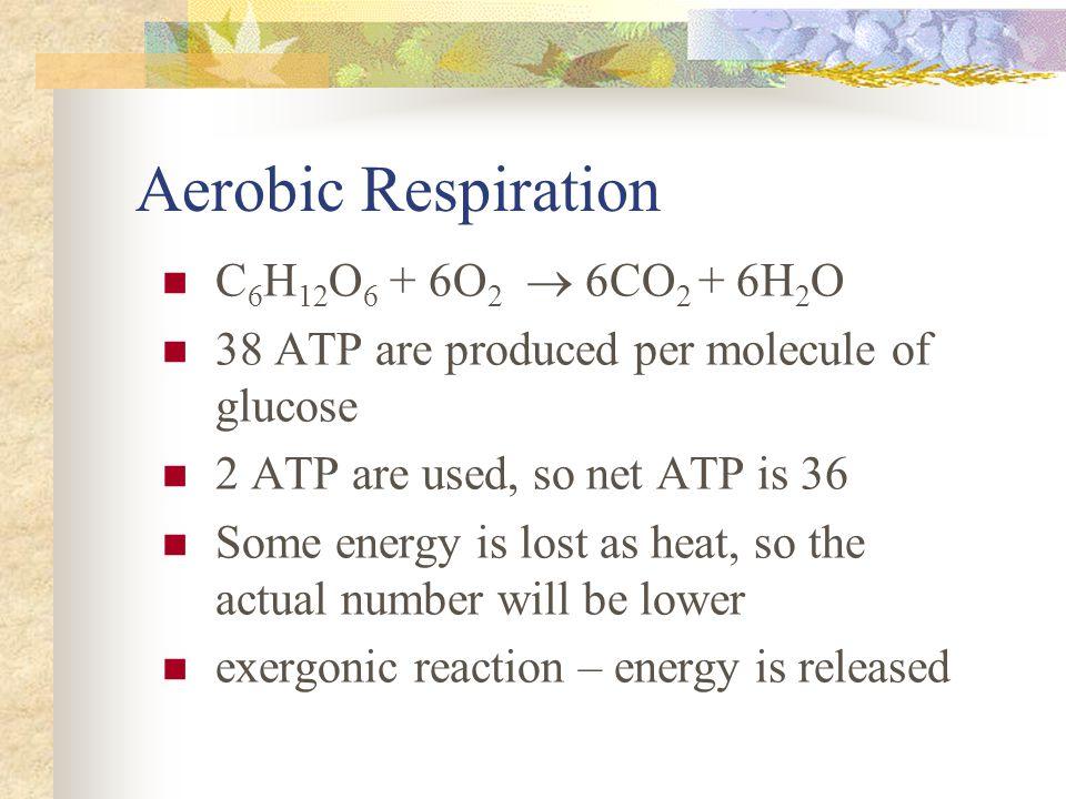 Aerobic Respiration C6H12O6 + 6O2  6CO2 + 6H2O