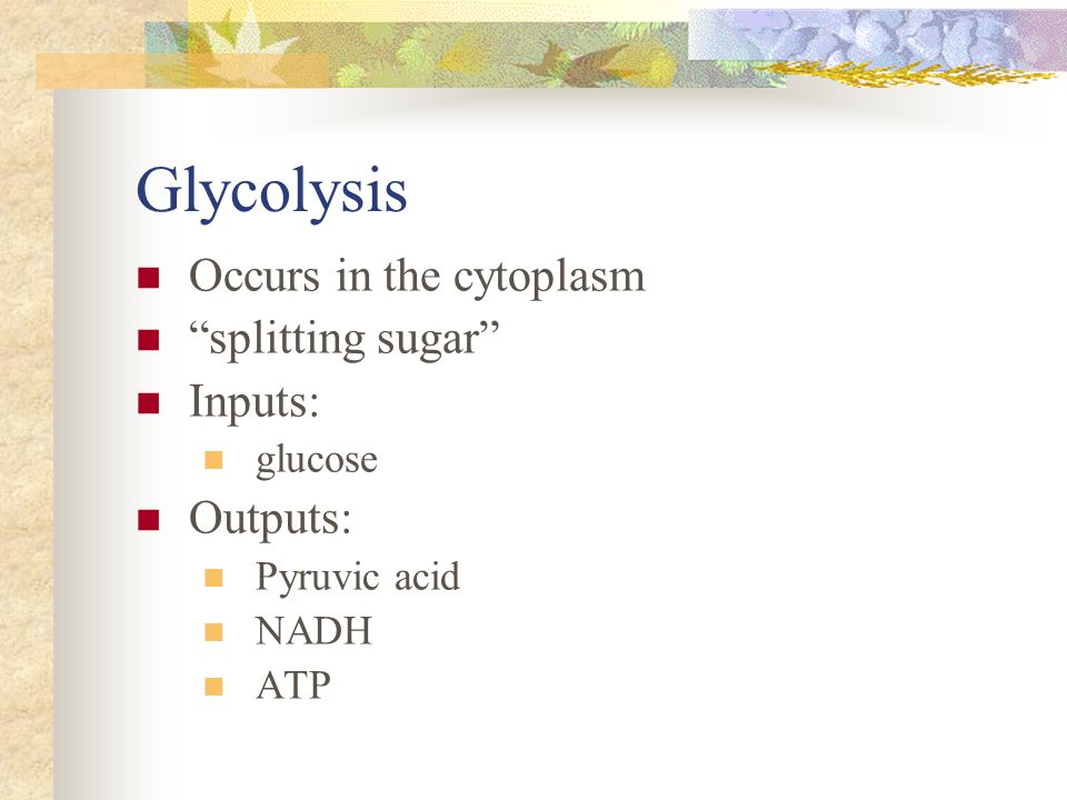Glycolysis Occurs in the cytoplasm splitting sugar Inputs: Outputs:
