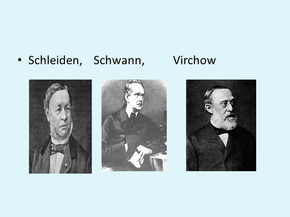 Schleiden, Schwann, Virchow