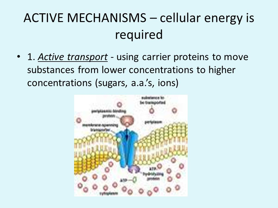 ACTIVE MECHANISMS – cellular energy is required