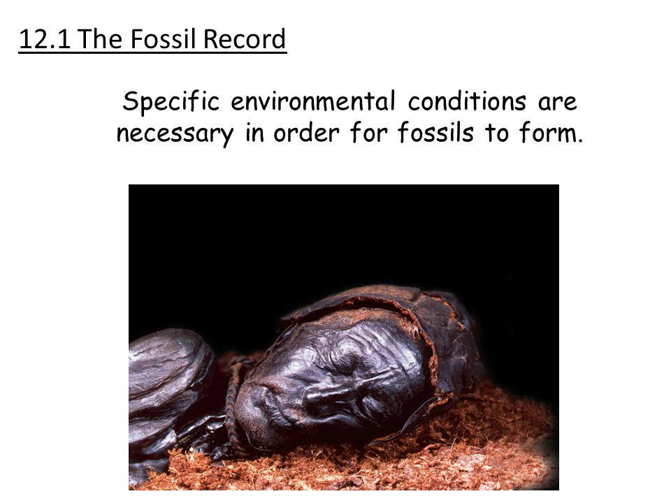 12.1 The Fossil Record Specific environmental conditions are necessary in order for fossils to form.