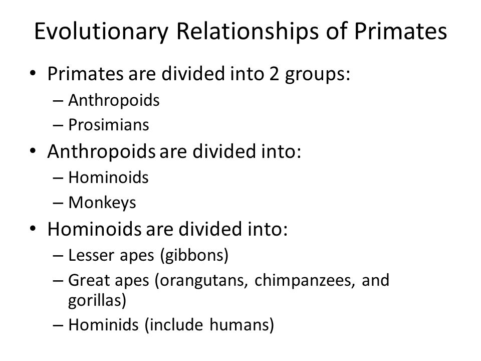 Evolutionary Relationships of Primates