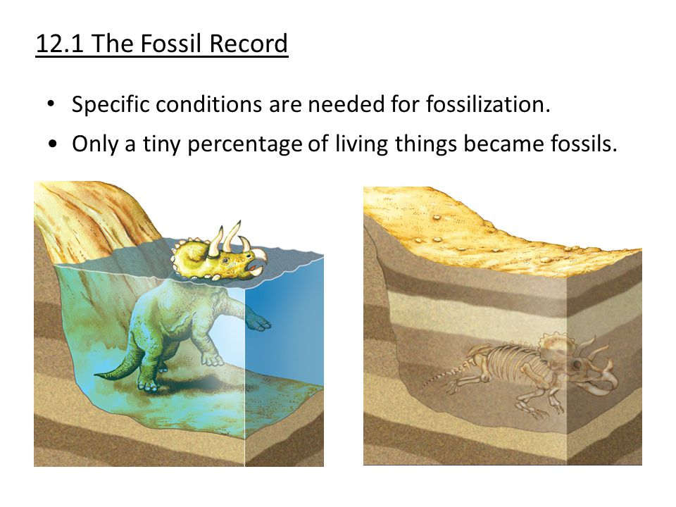 12.1 The Fossil Record Specific conditions are needed for fossilization.