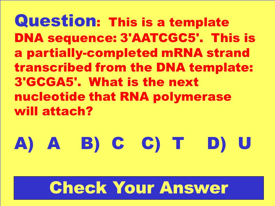 what is a template in dna - genetics jeopardy ppt download