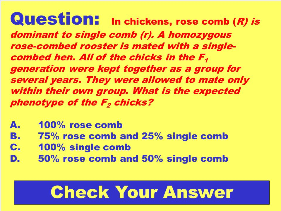 Question: In chickens, rose comb (R) is dominant to single comb (r)