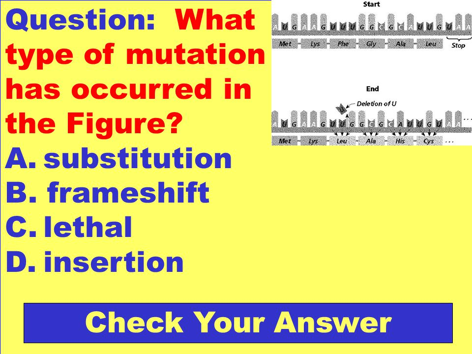 Question: What type of mutation has occurred in the Figure