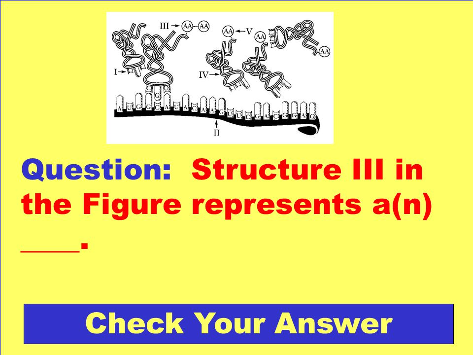 Question: Structure III in the Figure represents a(n) ____.