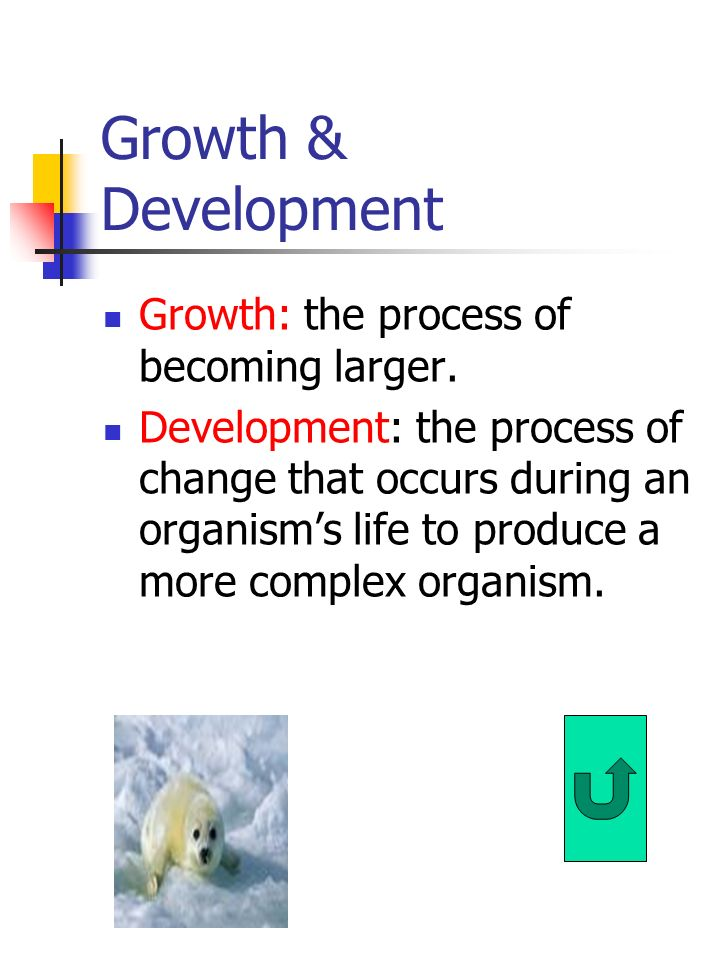 Growth & Development Growth: the process of becoming larger.