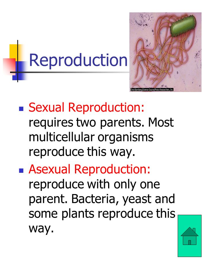 Reproduction: Sexual Reproduction: requires two parents. Most multicellular organisms reproduce this way.
