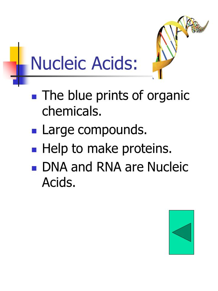 Nucleic Acids: The blue prints of organic chemicals. Large compounds.